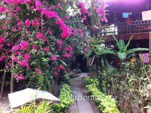 Orchids Resort